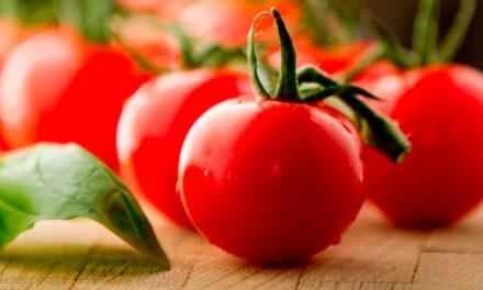 Cepêra colhe 30 milhões de quilos de tomate por safra projeta um crescimento de 20% em 2021