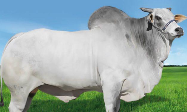Pioneiro na genética bovina no Brasil, Grupo CRV investe R$ 12 milhões para crescer 30% em 2021