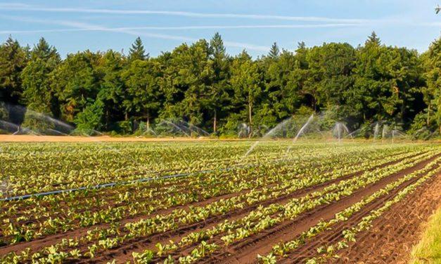 Agronegócio reduz uso de recursos com distribuição de água eficiente