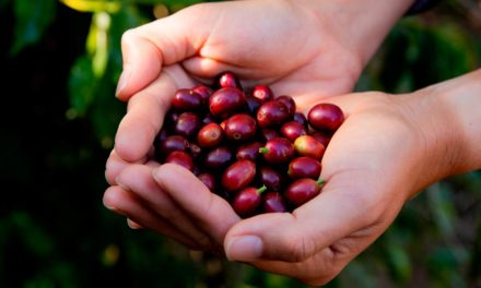 Fertilizantes foliares contribuem para maior produtividade e qualidade das colheitas de café