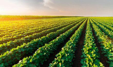 Estatísticas do setor de defensivos agrícolas em 2020