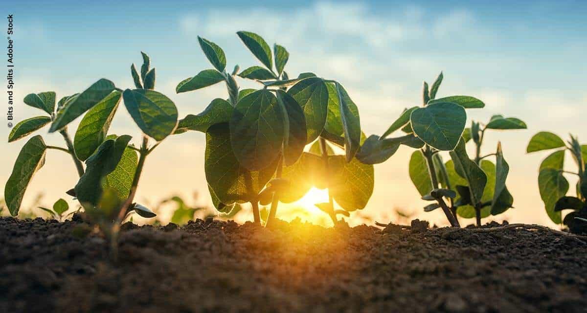 Plantabilidade traz ganho de produtividade para soja