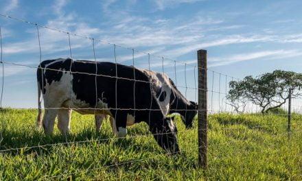 Tela pronta tem durabilidade e eficiência para a lucratividade da pecuária no Norte do Brasil