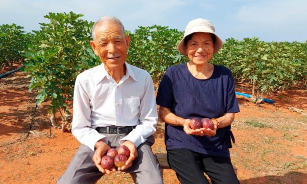 Casal de japoneses de 86 anos de idade realiza sonho e produz figos no Ceará