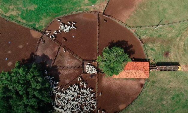 Empresa de nutrição de ruminantes cresce 20% com faturamento de R$ 130 milhões em 2020