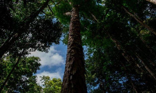 Agropalma atinge suas metas de responsabilidade socioambiental e traça novos objetivos até 2025
