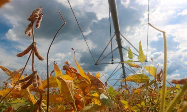Com irrigação por pivô, produtor de soja tem um salto na produtividade
