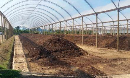 Compostagem inteligente acelera tratamento de resíduos orgânicos com respeito à natureza