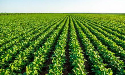 3tentos e Embrapa Pecuária Sul oficializam cooperação técnica para ajudar no controle de praga da soja
