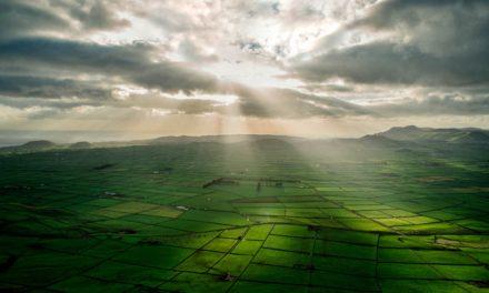 Agronegócio: a vocação do Brasil pujante