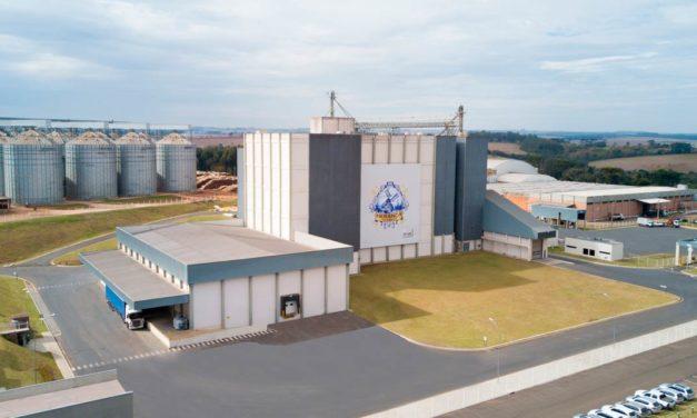 Investimentos e aumento do consumo de trigo refletem em números positivos para o setor