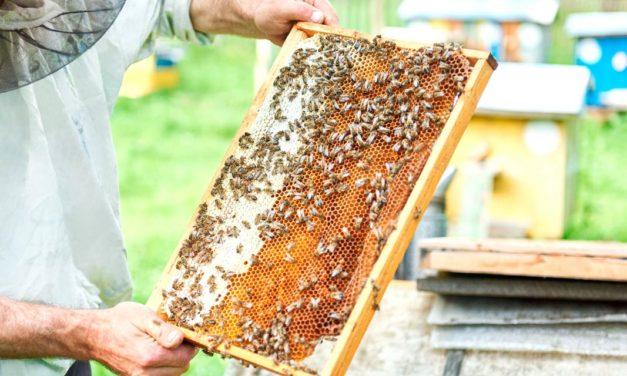Criadores de abelhas não gostam muito de falar sobre o cadastro na Defesa Agropecuária. Por que precisamos tratar disso?