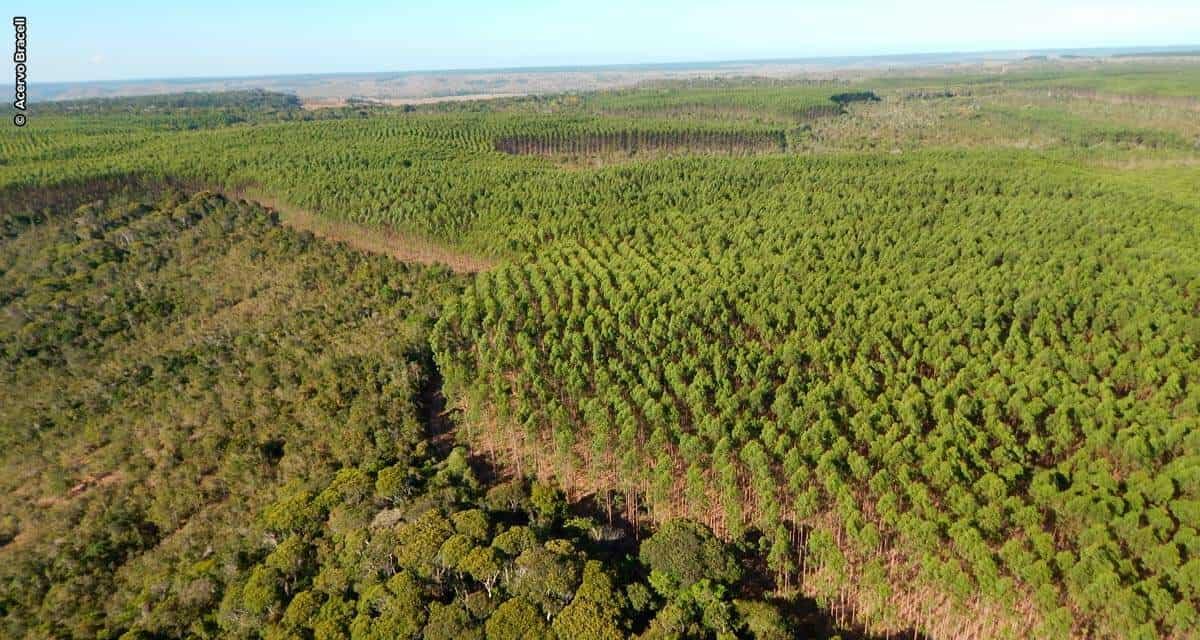 Bracell aposta no manejo florestal sustentável para a conservação do solo