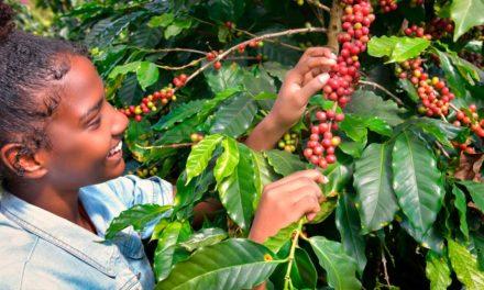 Empreendedores rurais são responsáveis por 25% do agronegócio brasileiro