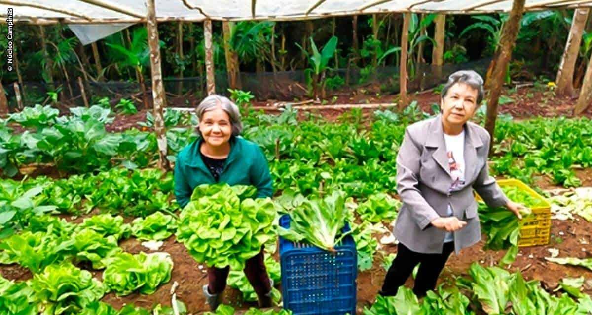 Jovens estudantes desenvolvem projeto para ajudar pequenos produtores rurais