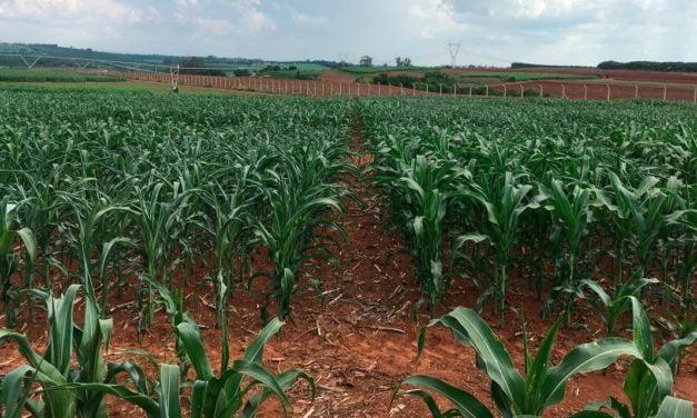 Compass Minerals – Plant Nutrition lança Improver Max para gramíneas