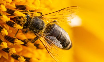 O método brasileiro que previne a extinção de abelhas