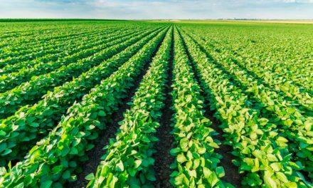 Defensivos x fertilizantes: equilíbrio entre substâncias garante alimentos mais saudáveis à população