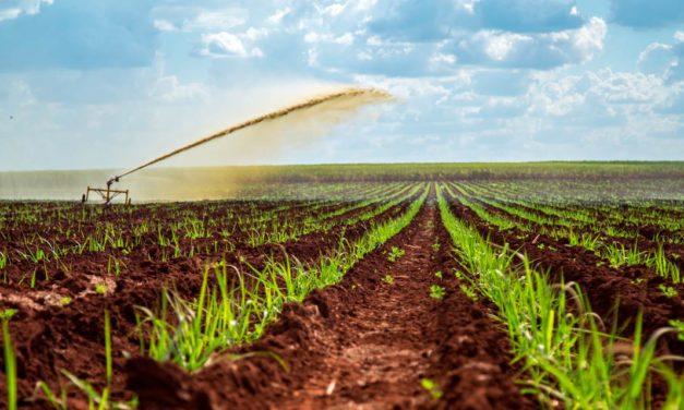 Mosaic Fertilizantes apresenta soluções multinutrientes para adubação de performance no cultivo da cana-de-açúcar