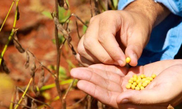 Volume de soja certificada da Cargill cresce 75% e 143 produtores recebem bonificação