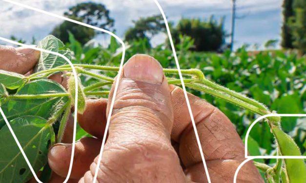 Programa de logística reversa no campo contribui para a sustentabilidade do setor agrícola