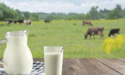 Fazendas de leite mais eficientes aumentaram produtividade 2,3 vezes mais rápido que a média nos últimos três anos