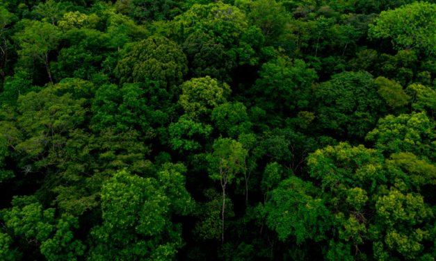 Semana do Meio Ambiente: projeto ajuda a estruturar cadeias produtivas que mantêm floresta em pé