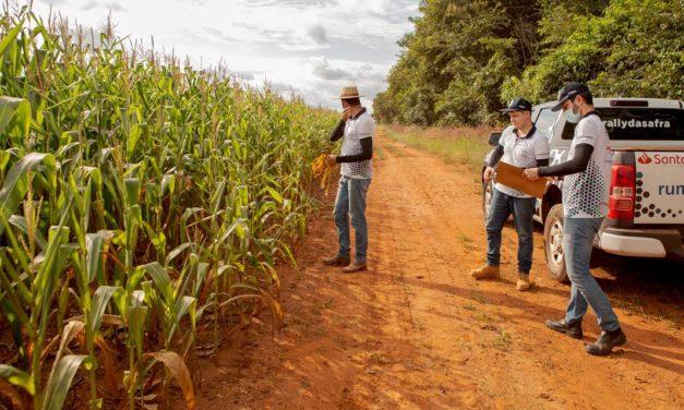 Perdas causadas pelo clima seco reduzem estimativa de milho segunda safra a 65,3 milhões de toneladas