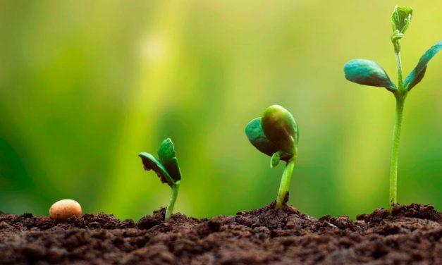 Syngenta Seeds anuncia dez novas cultivares para Brasil e Paraguai durante Encontro Anual de Multiplicadores