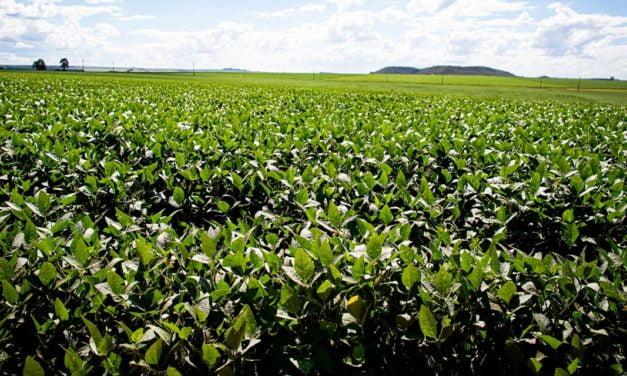 Tecnologia multissítio é essencial para o manejo eficiente da soja contra fungos