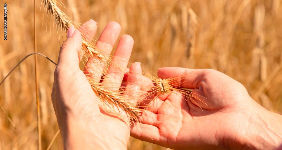 Como o Brasil pode mudar seu papel no mercado global de trigo?