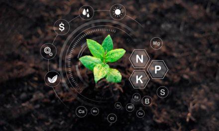 Mercado de fertilizantes especiais cresce 41,8% em 2020