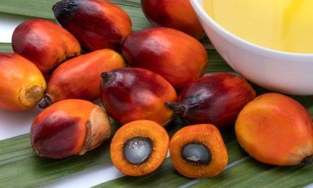 BASF expande portfólio de tensoativos certificados à base de óleo de palma sustentável