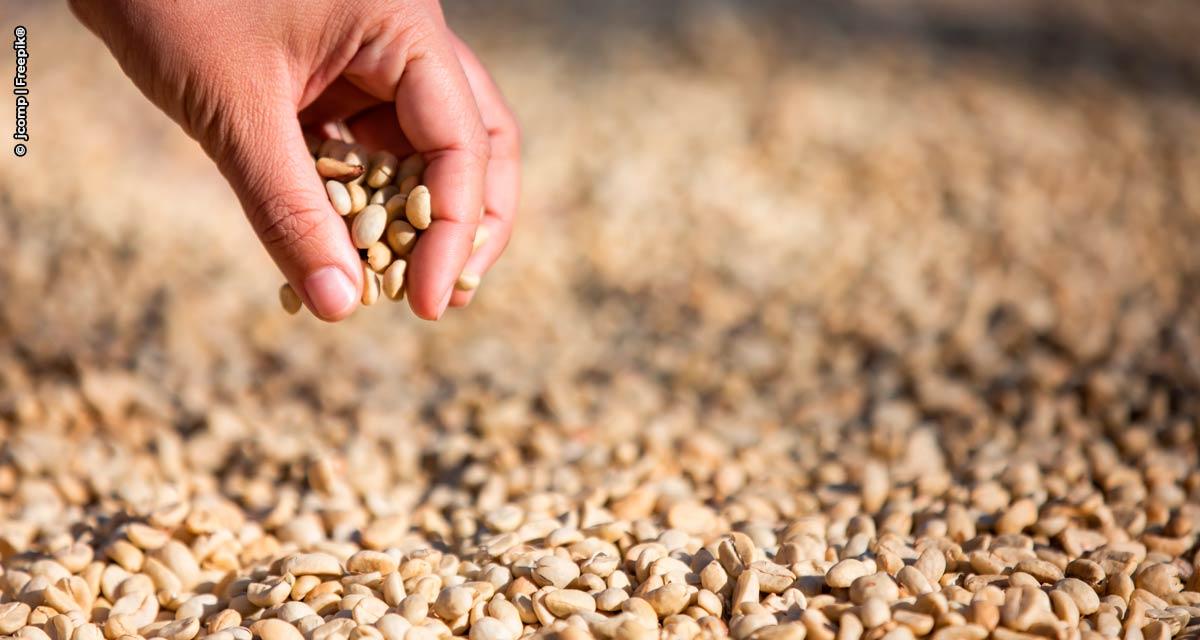 Café: Brasil exporta volume recorde de 45,6 milhões de sacas na safra 2020/21