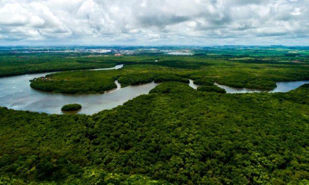Saiba de onde vem o produto que você consome e a importância disso para a conservação da floresta e para a nossa sobrevivência