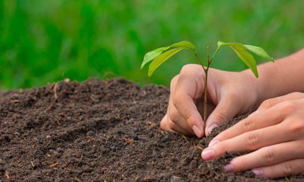 SIG pretende plantar 1 bilhão de árvores até 2025