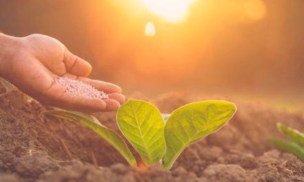 Com investimentos em P&D e em ERP, TMF Fertilizantes se apoia em inovações e dados para crescer