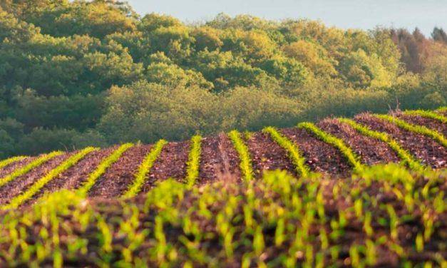 Plataforma digital 'nurture.farm', dedicada à agricultura sustentável, passa a fazer parte da rede OpenAg da UPL