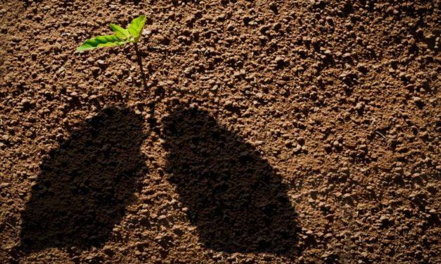 CEBDS lança marco regulatório para o mercado de carbono no Brasil