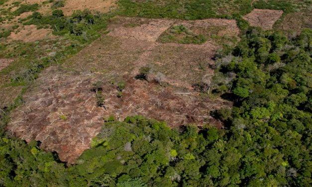 TNC lança guia sobre recuperação de solos degradados no Cerrado