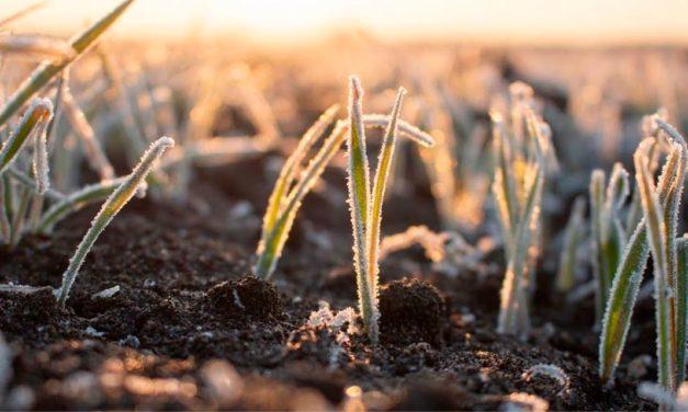Clima prejudica a produção agrícola e setor busca alternativa para se proteger