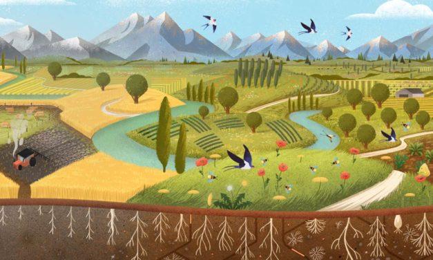 O grande redesenho de alimentos: regenerando a natureza a partir da economia circular