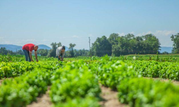 4 medidas para acompanhar o agronegócio do futuro