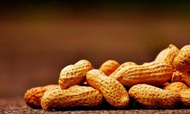 Primeiro semestre de 2021 registra receita de US$ 138 milhões em exportações de amendoim in natura