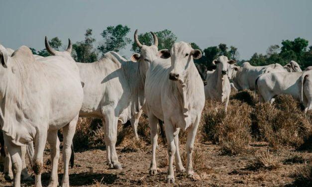 Expedição que quer traçar um panorama da criação de gado confinado no país realiza sua terceira e última etapa