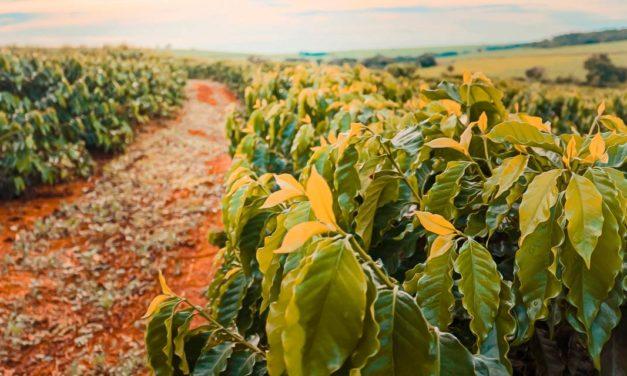 Seca pesará mais do que efeitos da geada na produção de café em 2022