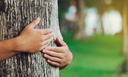 Empenhada na promoção de agenda sustentável, Yara integra a Coalizão Brasil Clima, Florestas e Agricultura