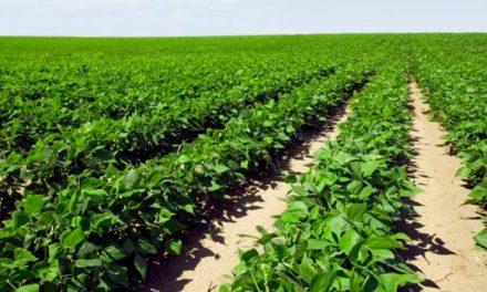 IHARA destaca soluções para o melhor manejo das principais pragas do feijoeiro no Congresso Nacional de Pesquisa de Feijão