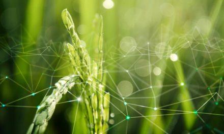 Bayer faz aporte financeiro em projetos de cooperativas para impulsionar inovação