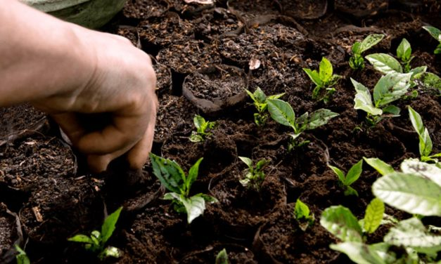 Dia do Café | Nespresso comemora 154 anos no Brasil com avanços na cafeicultura regenerativa